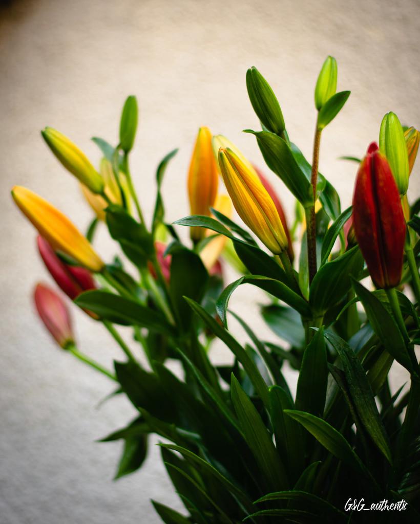 Kwiaty Tablica_